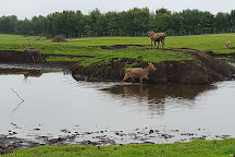 Knowsley Safari, Prescot, United Kingdom