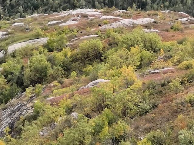 Mont du Lac-des-Cygnes