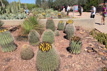 Desert Botanical Garden, Phoenix, United States