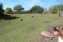 Crocodile Encounter, Angleton, United States