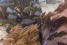 Dive Mike, Playa del Carmen, Mexico