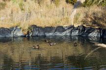 Orokonui Ecosanctuary, Dunedin, New Zealand
