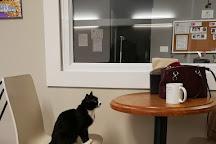 Feline Cafe, Ottawa, Canada
