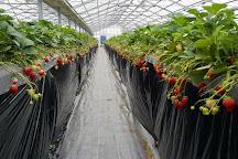 Kawatsura Strawberry Farm, Sanmu, Japan