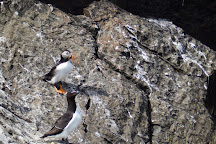 Molly Bawn Whale & Puffin Tours, Mobile, Canada