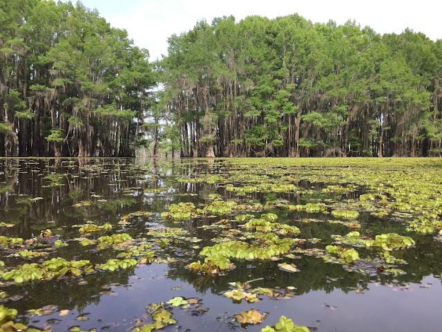 Caddo Lake Tours and Canoe Rentals