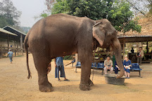 Thai Elephant Care Center, Mae Rim, Thailand