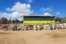 Donkey Sanctuary Aruba, Santa Cruz, Aruba
