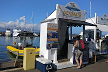 Ultimate Whale Watch & Snorkel, Lahaina, United States