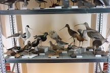 Natuurmuseum Fryslan, Leeuwarden, The Netherlands