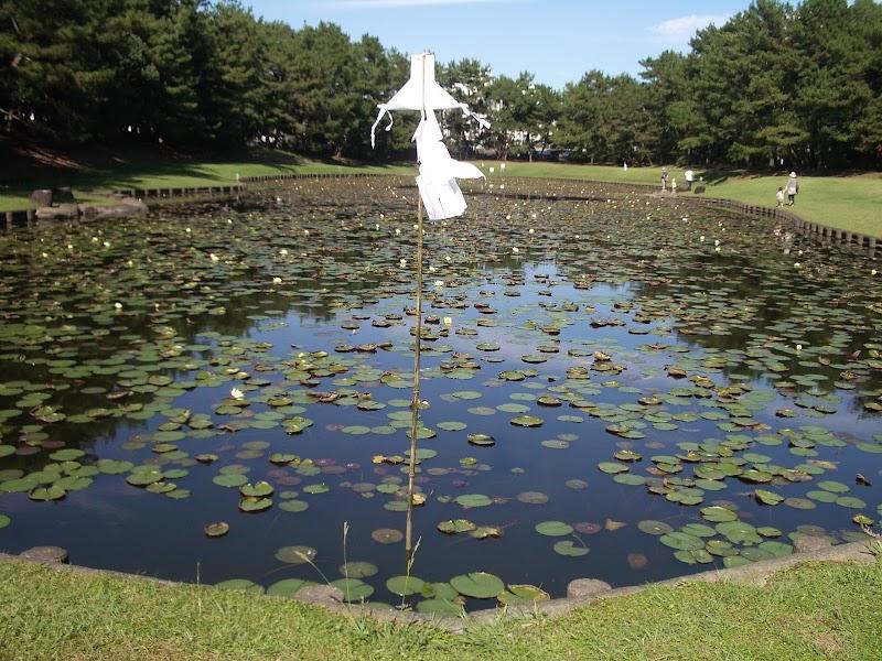 阿波岐原森林公園市民の森「みそぎ池」