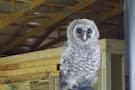 Hawk Manor Falconry