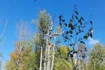 Cranberry Glades Botanical Area, Marlinton, United States