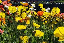 Sunken Gardens, Napier, New Zealand