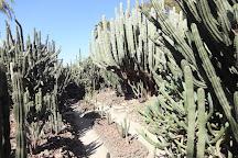 Cactus Garden Sailana, Ratlam, India