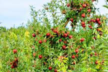 The Big Apple Farm, Wrentham, United States