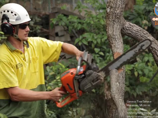 Manassas Tree Service