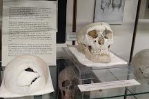 Warren Anatomical Museum, Boston, United States