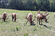 Amber Elk Ranch, Ludington, United States
