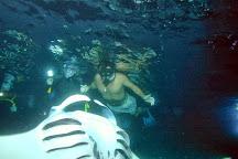 Coral Reef Snorkel Adventures, Kailua-Kona, United States