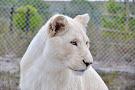 Panthera Africa - Big Cat Sanctuary