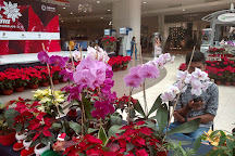 Galerias Cuernavaca, Cuernavaca, Mexico