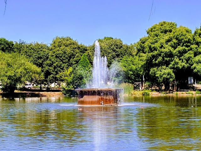 Zoo Lake Swimming