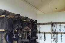 Hella Horse Rental, Hella, Iceland