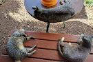 Lanai Cat Sanctuary