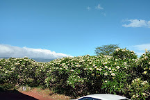 Molokai Plumeria, Kaunakakai, United States