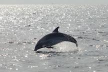 Dolphin Watching Rovinj, Rovinj, Croatia