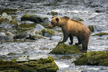 Anan Creek Wildlife Viewing Site, Wrangell, United States