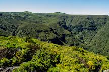 Vereda do Fanal, Madeira, Portugal
