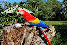 Rancho Tropical, Puerto Jimenez, Costa Rica