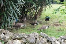 Hampden Estate, Falmouth, Jamaica