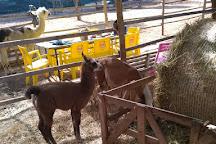 Var Lamas, Six-Fours-les-Plages, France