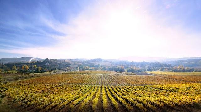 Domaine J Laurens -producteur de vin - Crémants et blanquette de Limoux