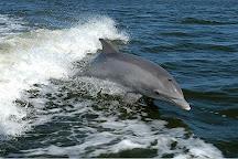 Anna Maria Island Dolphin Tours, Anna Maria, United States
