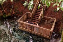 Hamurana Springs Nature Reserve, Hamurana, New Zealand