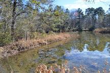 Kalmia Gardens, Hartsville, United States