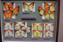 Nawa Insect Museum Haimurubushi, Kohama-jima, Japan