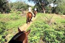 Houston's Horseback Riding, Tucson, United States