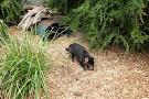 Moonlit Sanctuary Wildlife Conservation Park