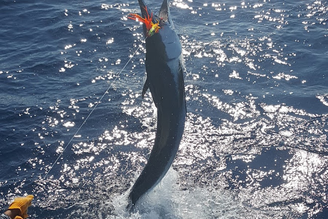Catch Fish Cabo, San Jose del Cabo, Mexico