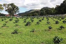 Fazenda Sao Luiz da Boa Sorte, Vassouras, Brazil