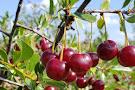 Prairie Berry Farm