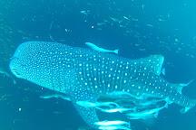 Whale Shark Point, Derawan Islands, Indonesia
