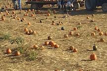 Devine's Corn Maze & Pumpkin Patch, Harrodsburg, United States