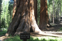Mariposa Grove, Yosemite National Park, United States