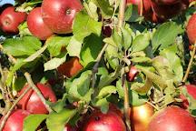 Lynd Fruit Farm, Pataskala, United States